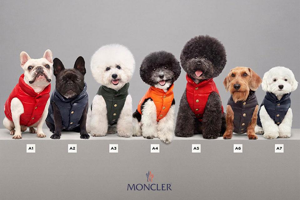 moncler-dog-jacket-mondog-collection-main