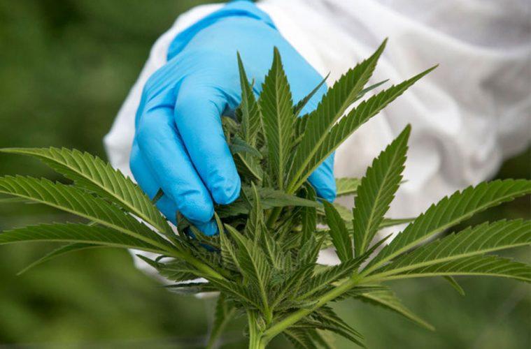 thailand-medical-marijuana-legalize-main