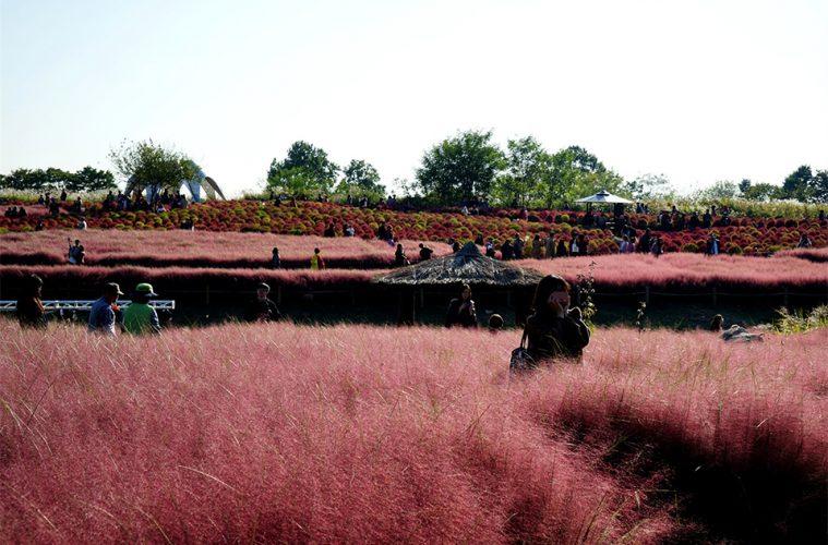 haneul-park-2019-seoul-silver-grass-festival-info-main